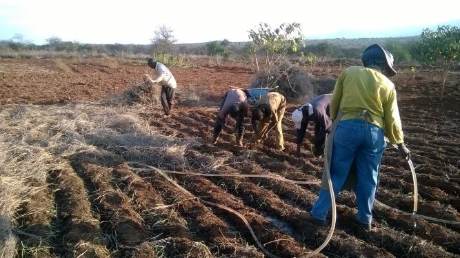 Dryland farming in Kajiado County