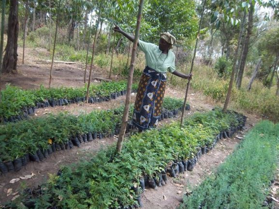 FSK supports rural communities to establish tree nurseries