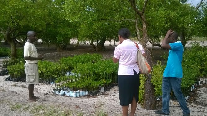 Mangrove Tree Nursery