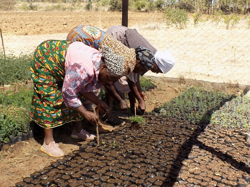 Members of Mithuri group potting seedlings