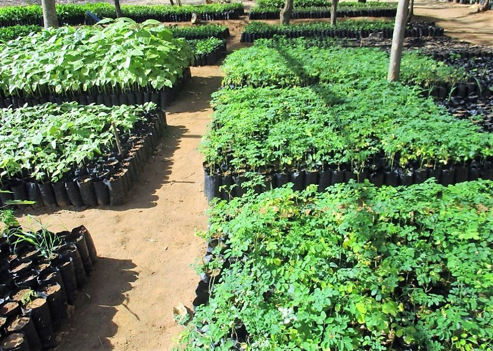 Tree Nursery plot